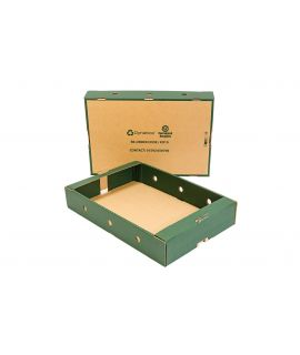 Dynabox™ Fruit Trays with Green Sides